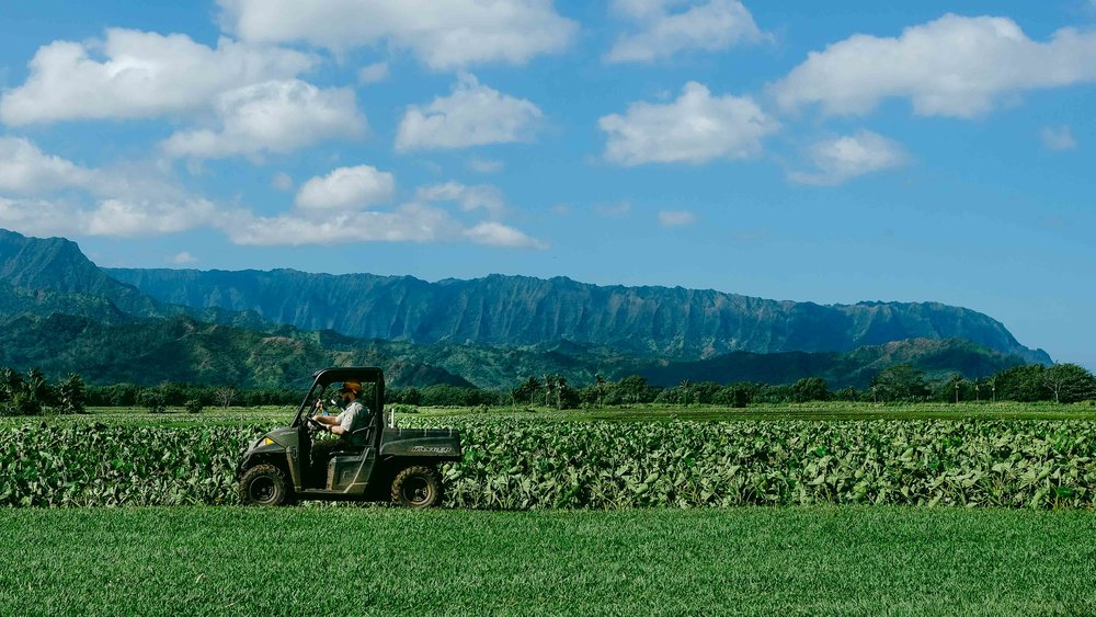 Tractor tending to the taro fields