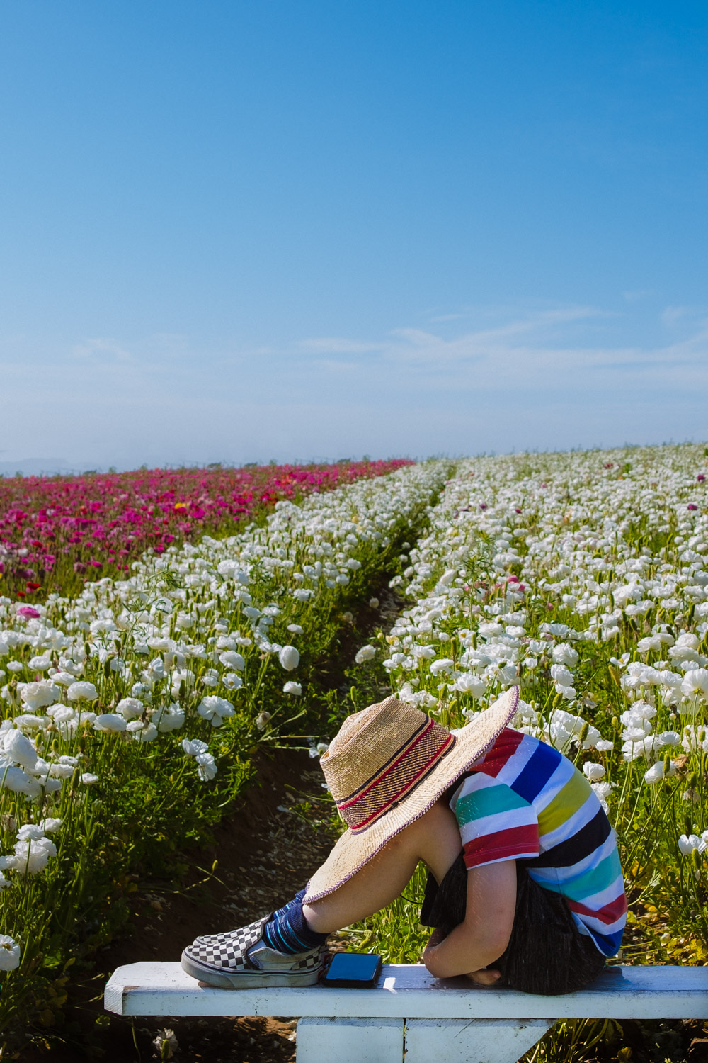A boy at the Flower Fields
