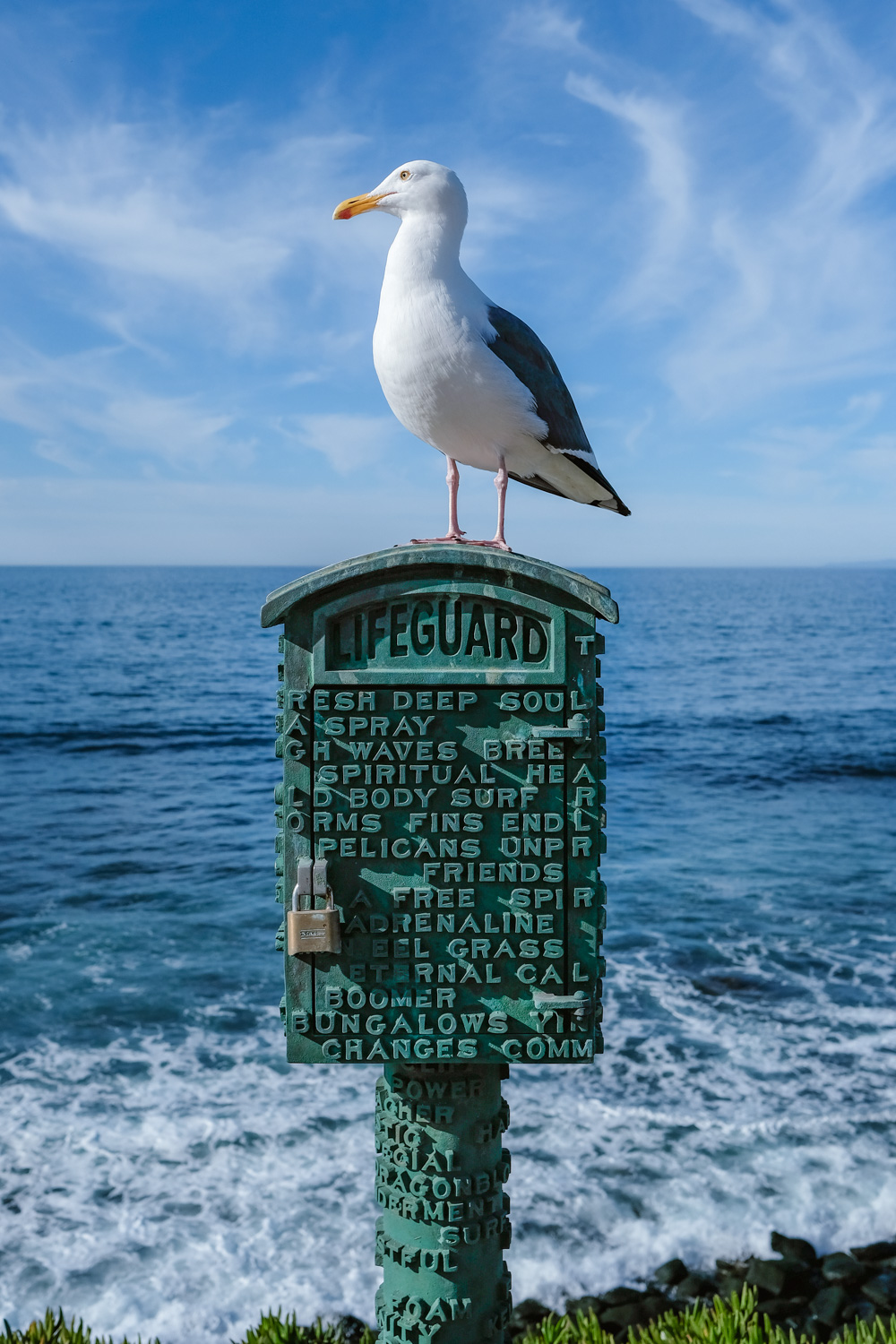 "A seagull in La Jolla - San Diego travel guide by ""And Then I Met Yoko"". Photography by Natasha Lequepeys #travelphotography #travelblog #sandiego"