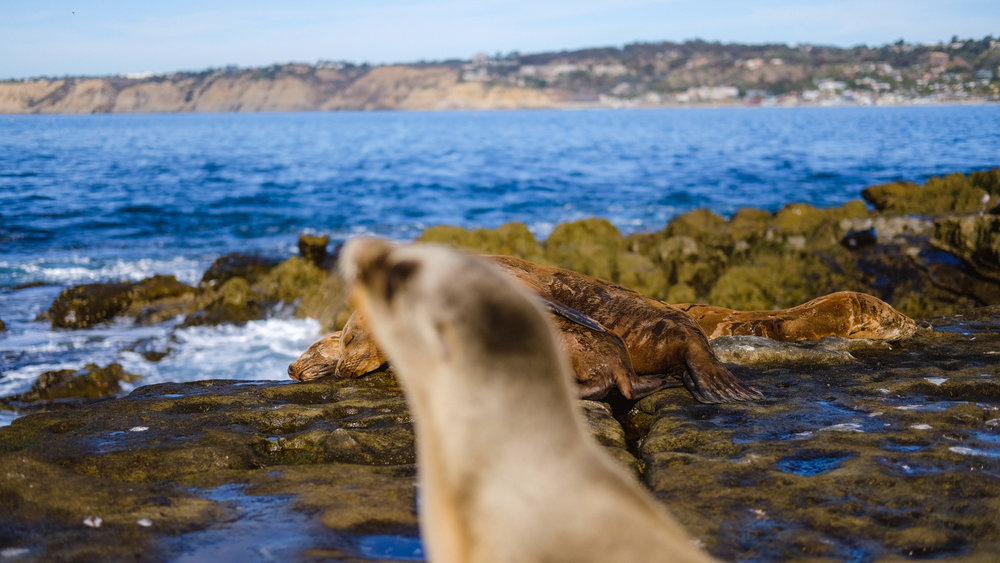 A sea lion photobomb