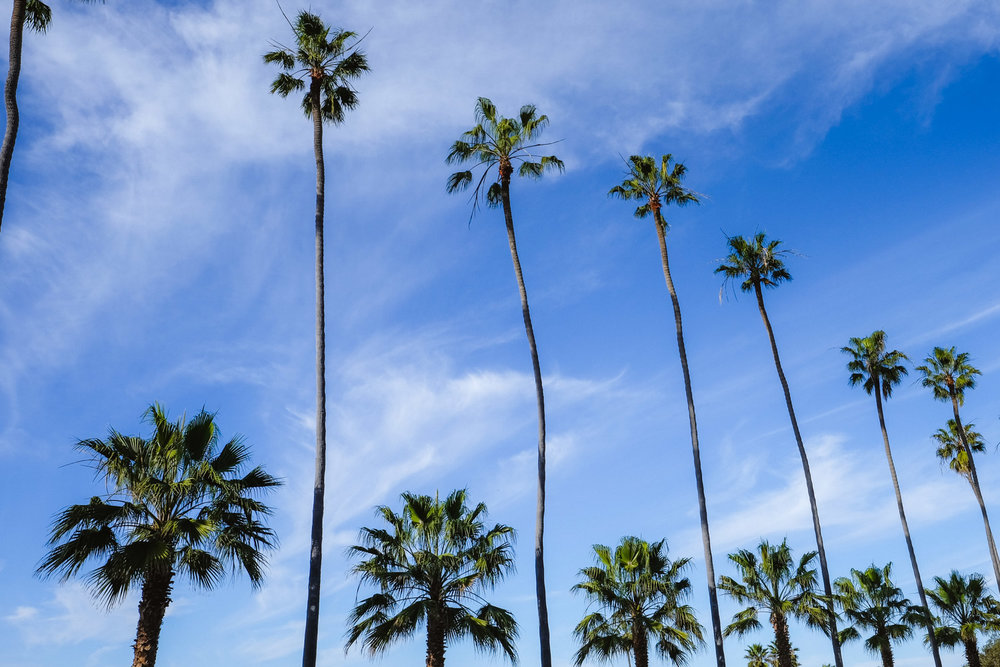 "Palm trees in La Jolla - San Diego travel guide by ""And Then I Met Yoko"". Photography by Natasha Lequepeys #travelphotography #travelblog #sandiego"