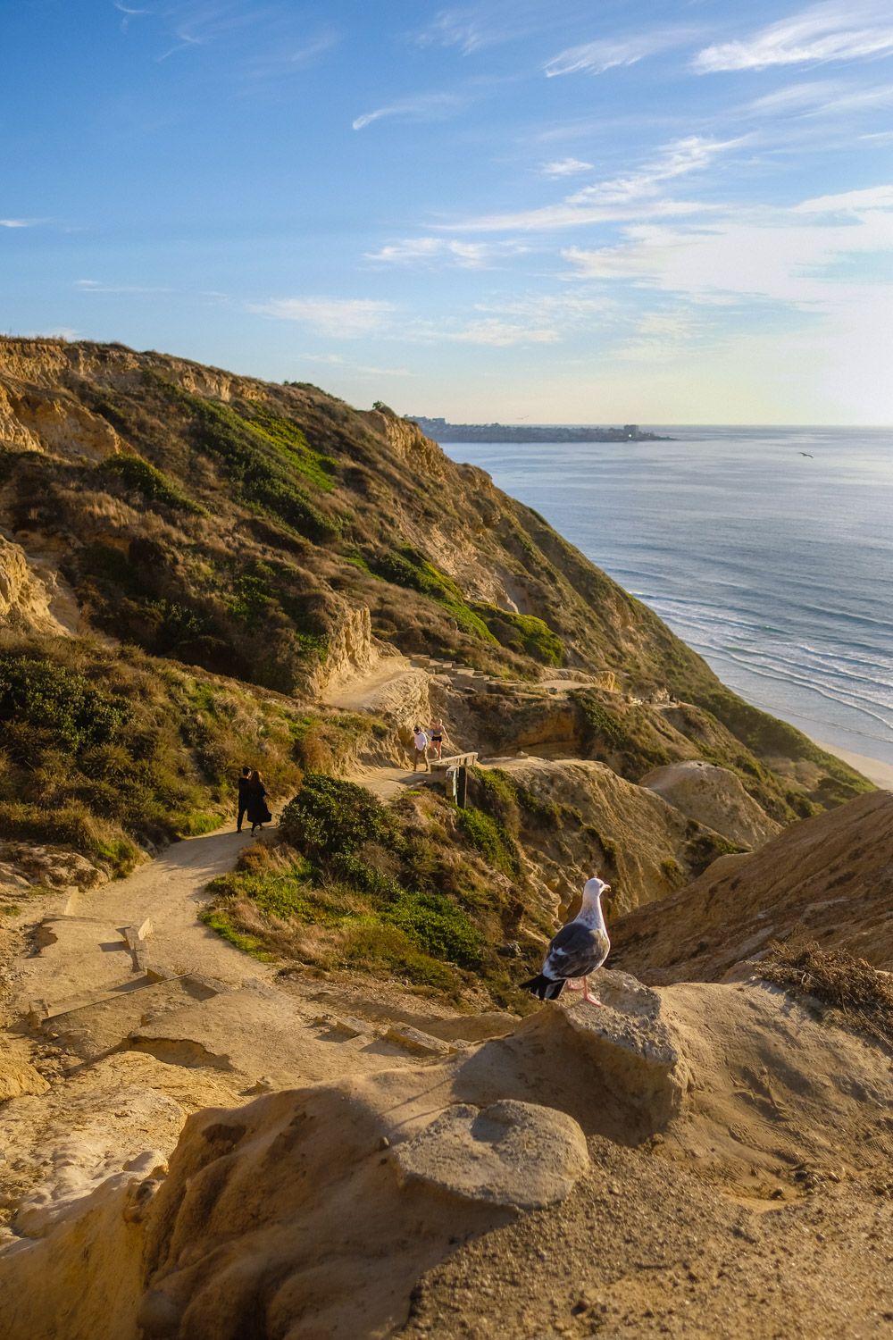 "The path down to Black's Beach - San Diego travel guide by ""And Then I Met Yoko"". Photography by Natasha Lequepeys #travelphotography #travelblog #sandiego"