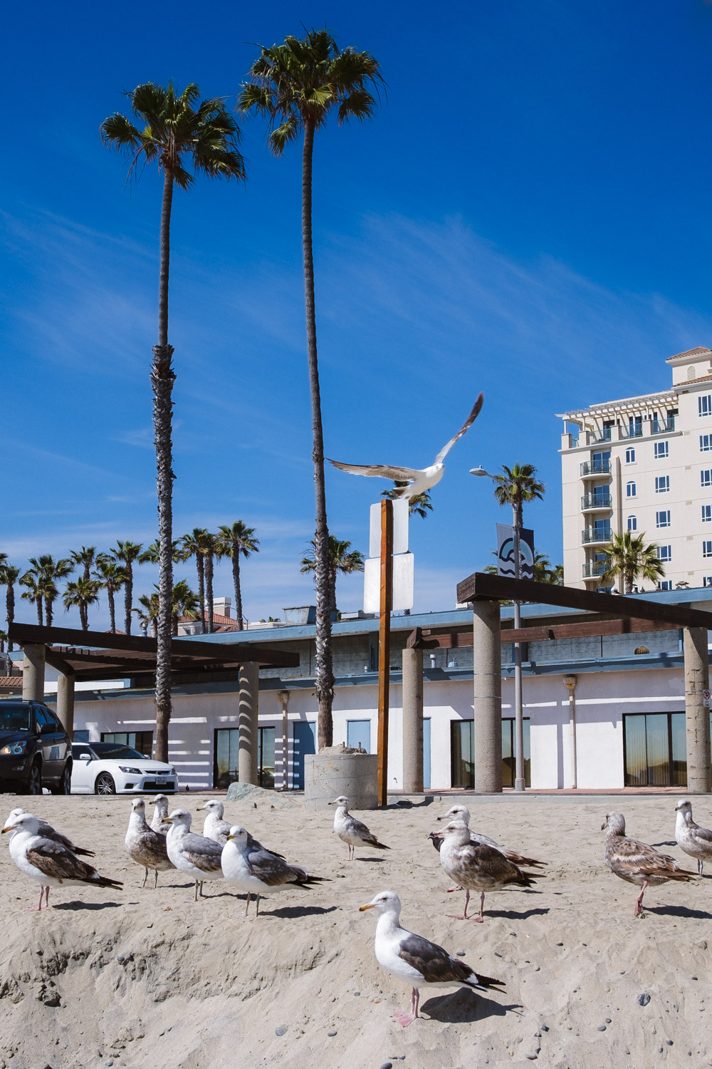 "Seagulls in Oceanside - San Diego travel guide by ""And Then I Met Yoko"". Photography by Natasha Lequepeys #travelphotography #travelblog #sandiego"