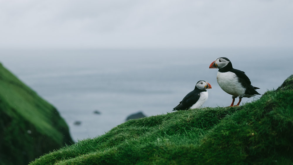 Visit the island of Mykines during the summer and see hundreds of puffins.
