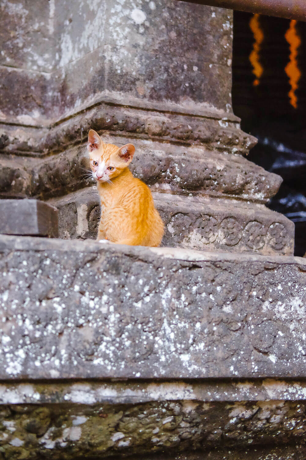 A kitten roaming through the temple of Angkor Wat.     #siemreap #angkorwat #travelguide #siemreapitinerary #cambodia #travelphotography #landscapephotography #fujifilm #siemreapprivatetour