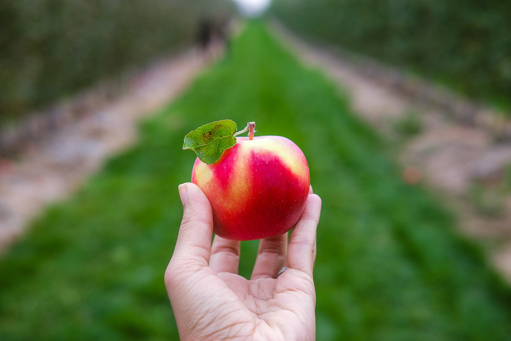 What a pretty looking apple