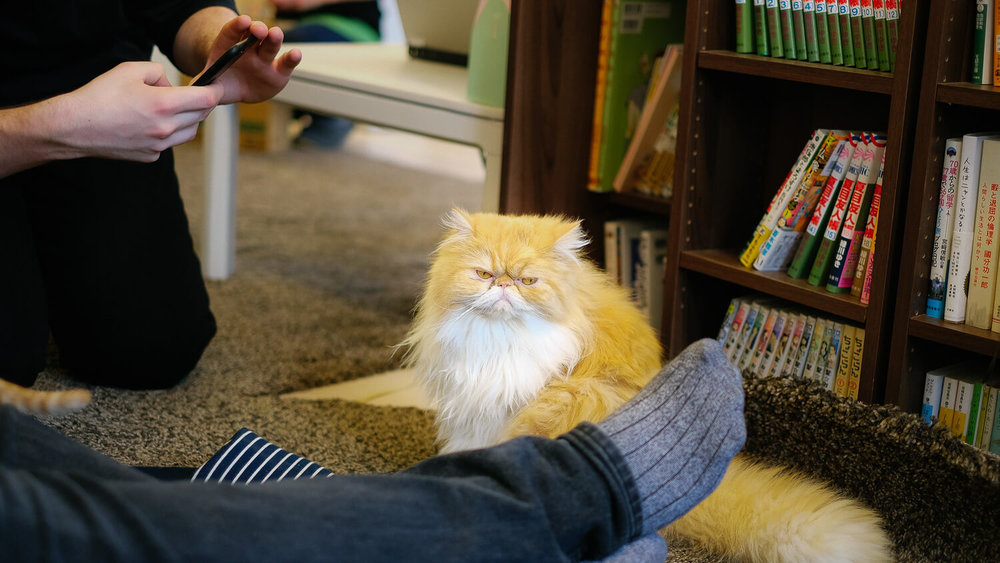 Thrilling Time at a Cat Café