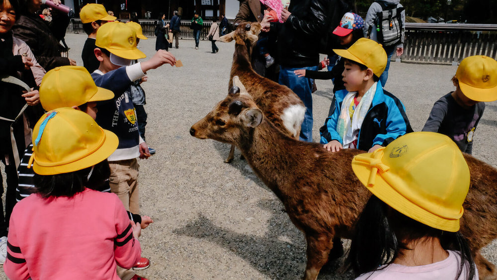 "Kids feeding deer at Nara Park. Travel photography and guide by © Natasha Lequepeys for ""And Then I Met Yoko"". #japan #japanitinerary #travelblog #fujifilm #asia"