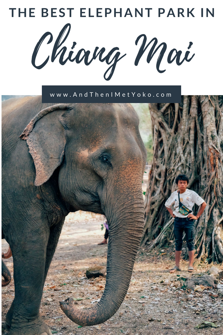 Learn about the great work at the Elephant Nature Park in Chiang Mai, and how your visit can help the elephants. Also read about why elephant riding is so bad. #elephants #thailand #chiangmai #elephantnaturepark #animals #wildlife #wildlifephotography #volunteer #rescuedanimals #animaltourism #ridingelephants #elephantrides #thailandphotography #naturephotography #travelphotography #travelguide #travelblog #fujifilm #elephantsanctuary #animaltourism #animalcruelty