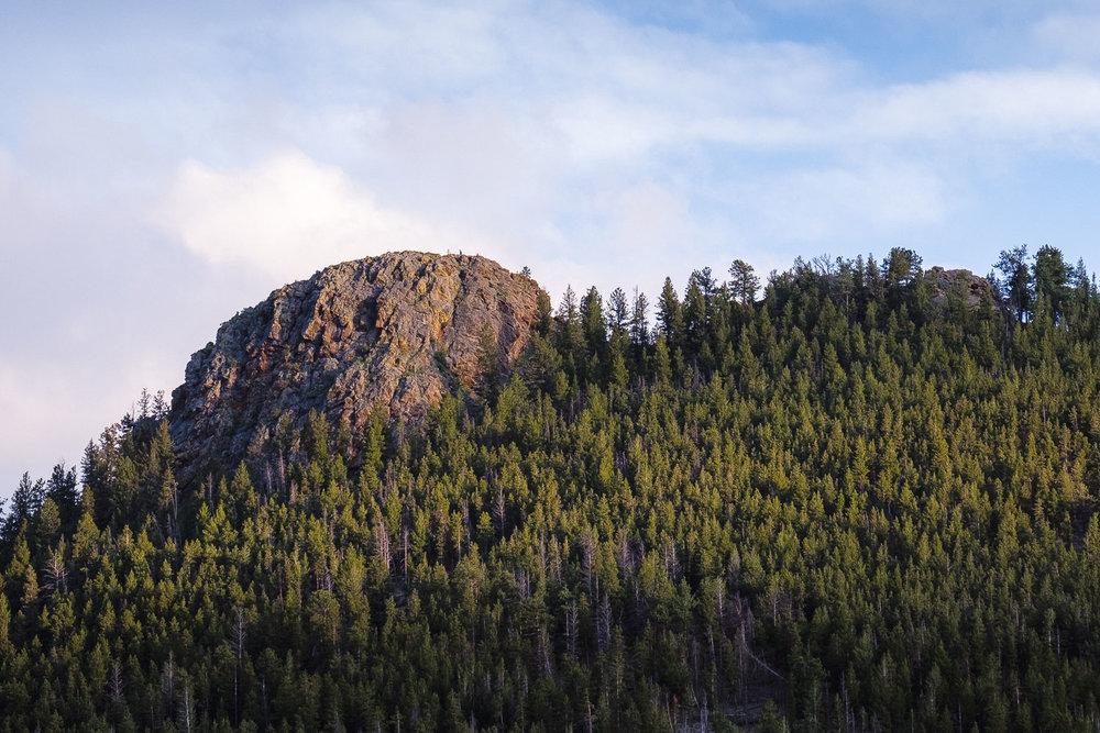 Sun setting on evergreens in RMNP