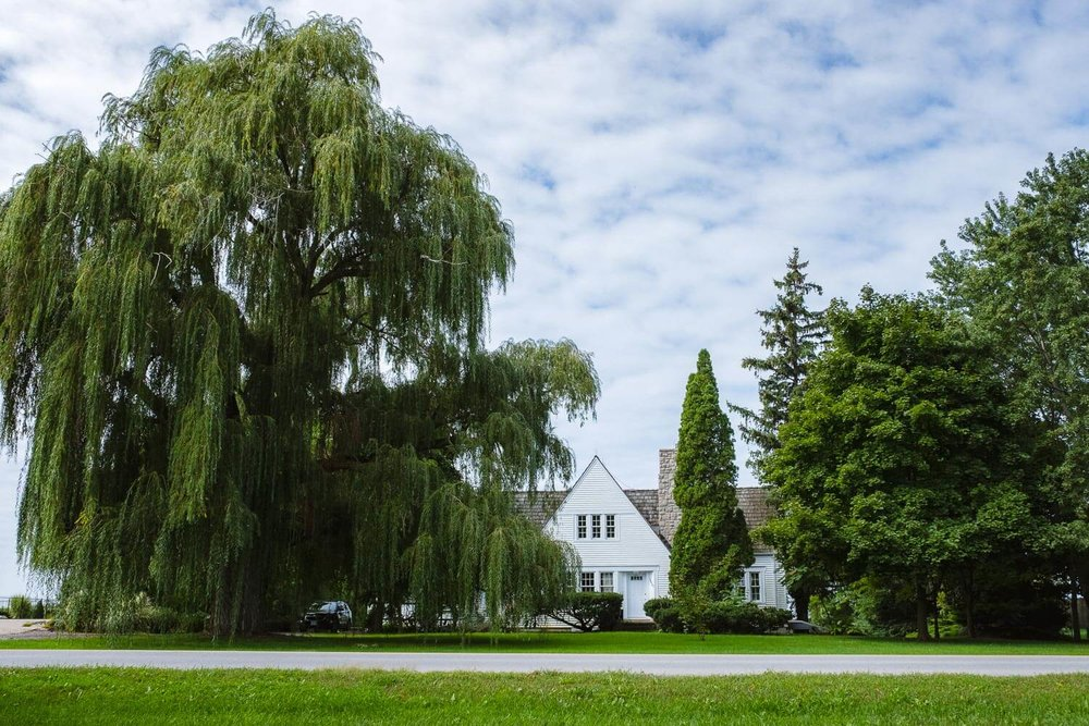 A beautiful weeping willow and house
