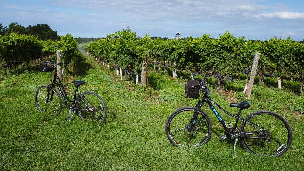 Biking through the vineyards