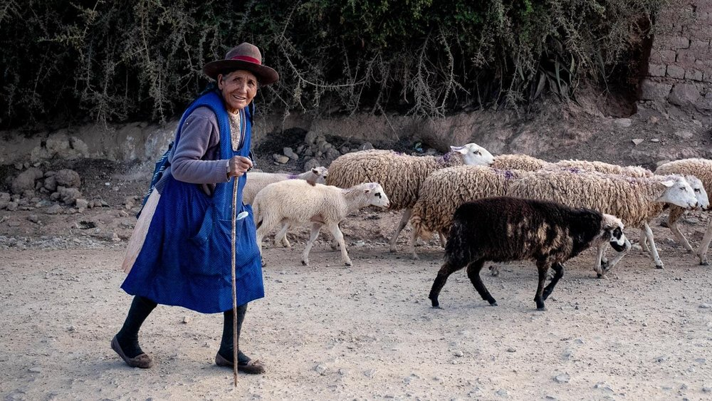 "Woman herding sheep, The Sacred Valley, Peru. Travel photography and guide by © Natasha Lequepeys for ""And Then I Met Yoko"". #travelguide #photoblog #fujifilm #machupicchu #sacredvalleyitinerary"