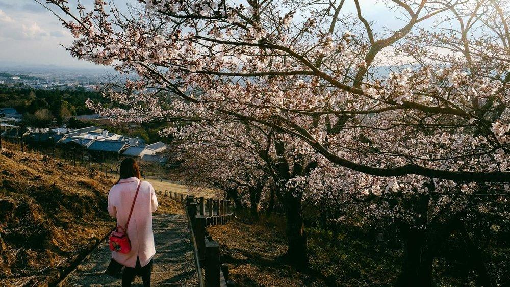 "A girl walks down Mount Wakakusa during cherry blossom season. © Natasha Lequepeys for ""And Then I Met Yoko"". #japan #japanitinerary #travelblog #fujifilm #asia"