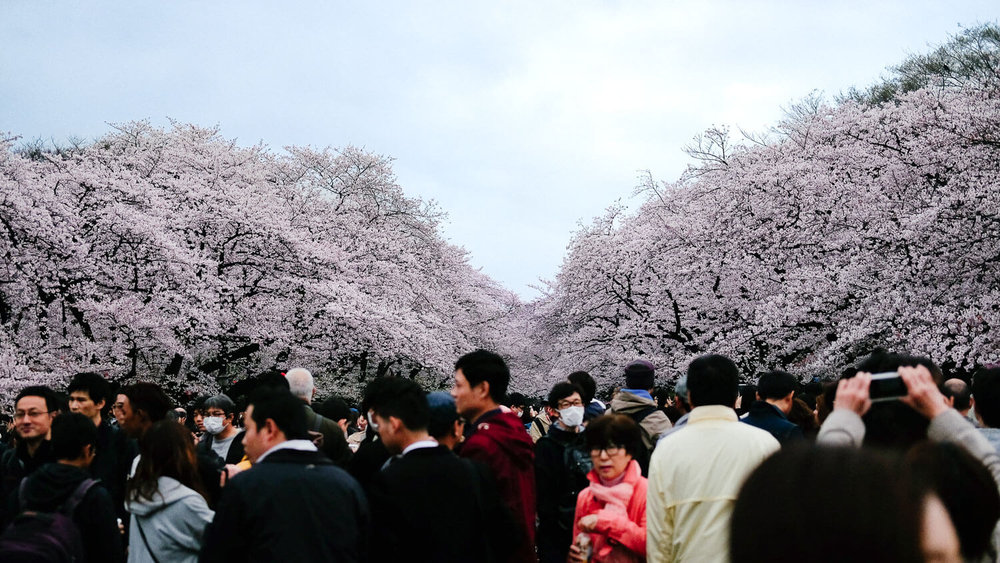 """Cherry blossom crowds in Ueno Park, Tokyo. Travel photography and guide by © Natasha Lequepeys for """"And Then I Met Yoko"""". #japan #japanitinerary #travelblog #fujifilm #asia"""