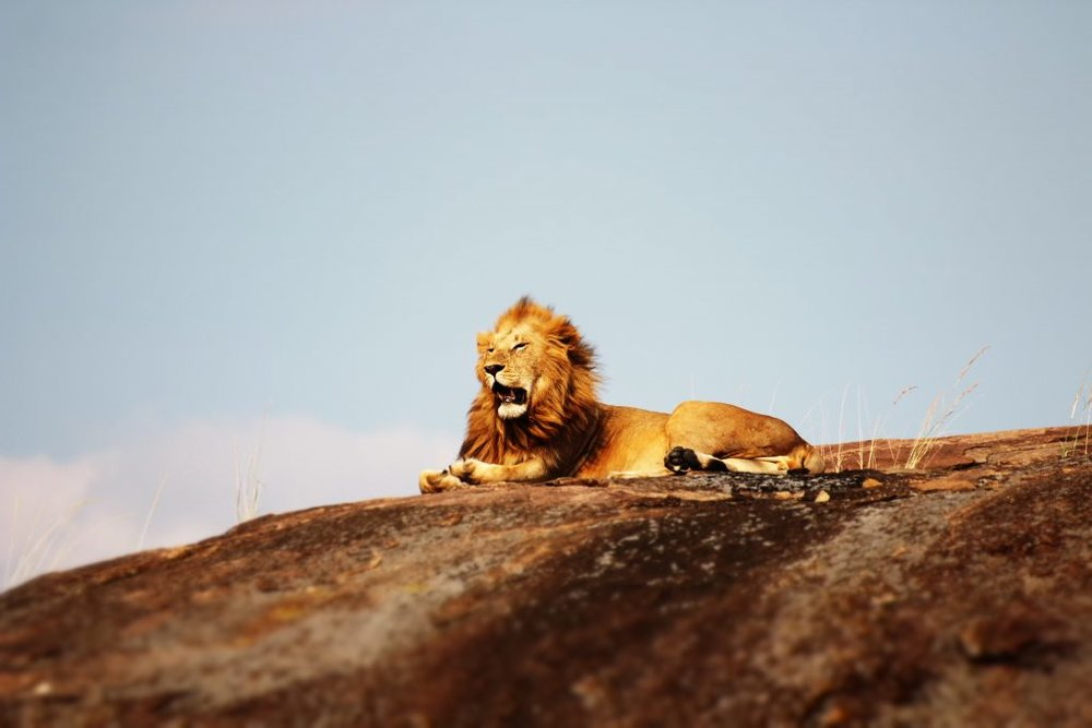 soaring-high-ministries-church-in-reno-lion.jpg