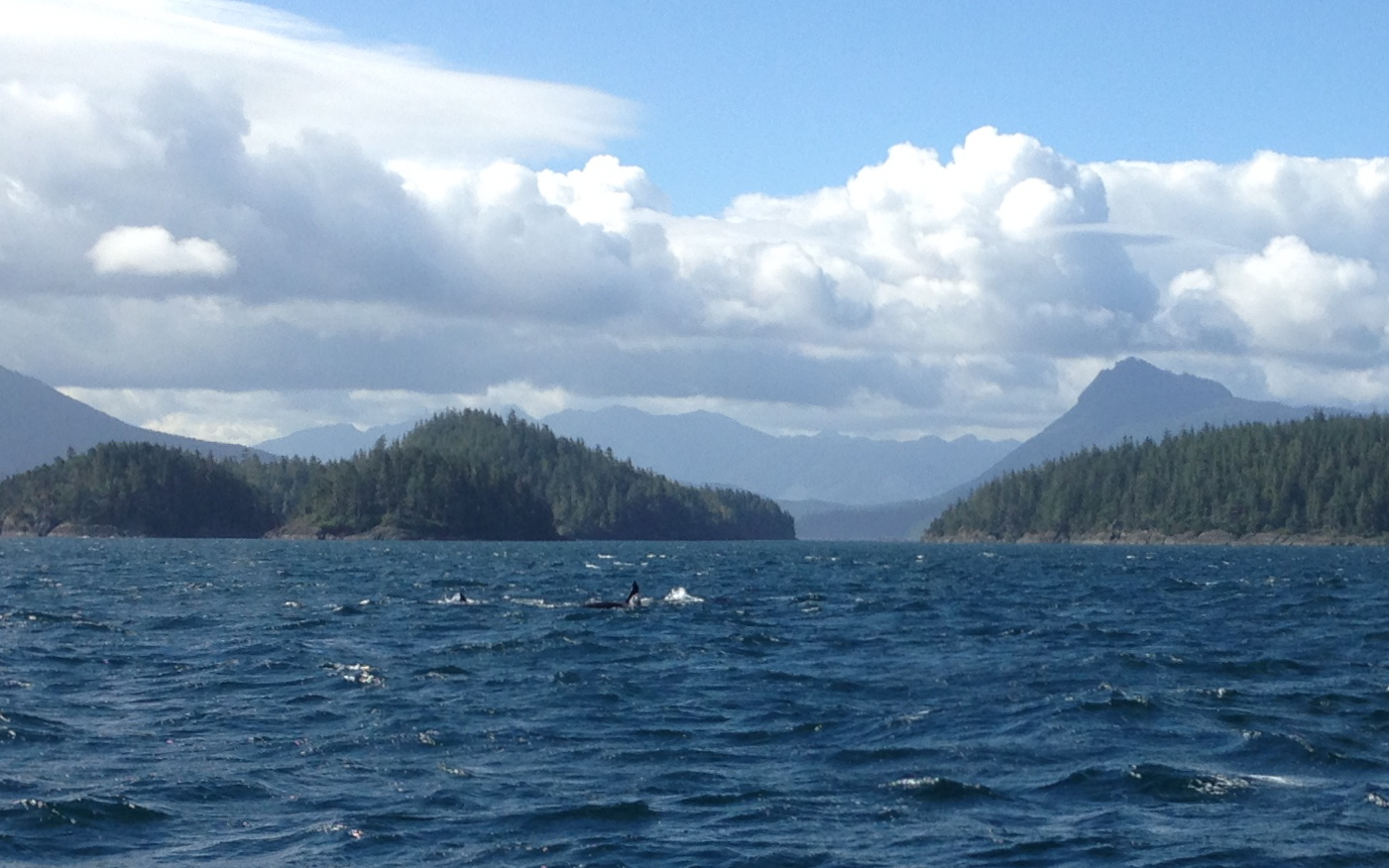 The waves on which we sailed today.