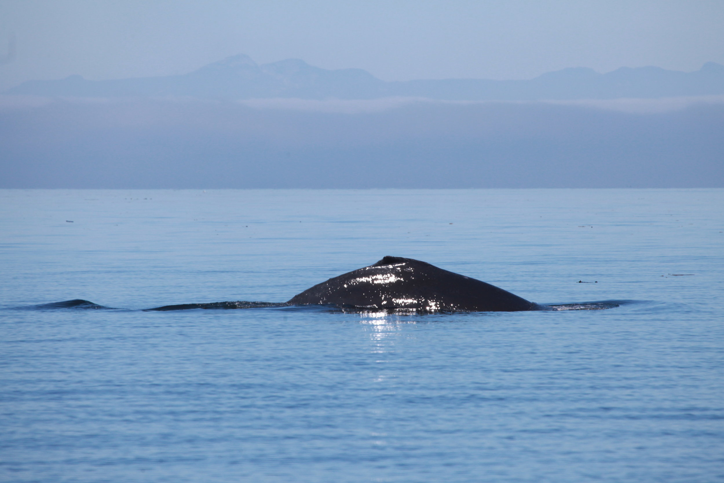 Whale watching in the Queen Charlotte Strait today.
