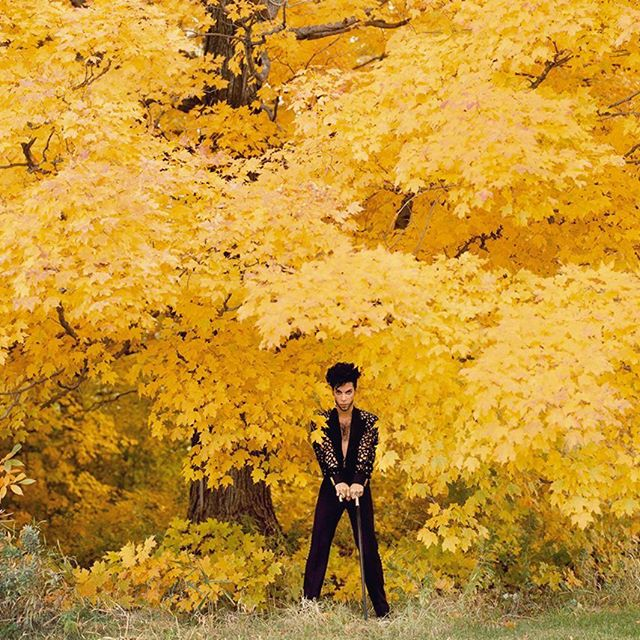 Today in CT vibrant leaves and a little rain drizzle. Channeling energy of an icon; shot by Herb Ritts. 🍂🔝