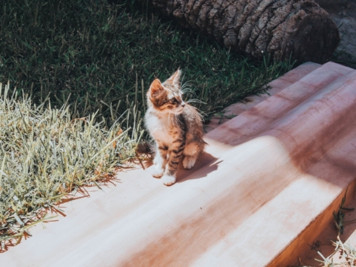 Marrakech, Morocco  - In Marrakech and many other places around Morocco, you will see many stray cats walking around. This adorable kitty is the star of the show during that moment while I was wandering around the Saadian Tombs.