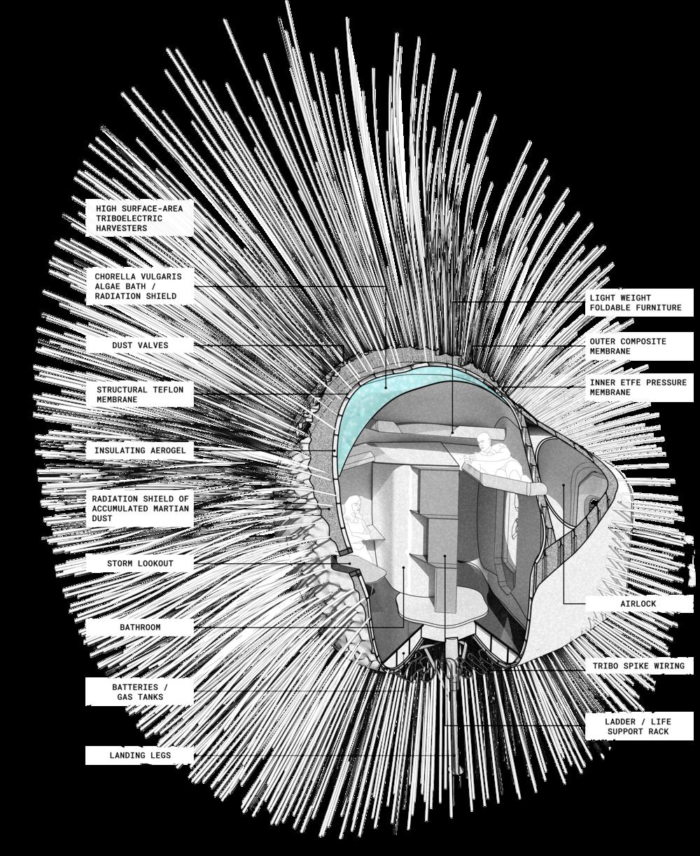 dandelion_axonometric