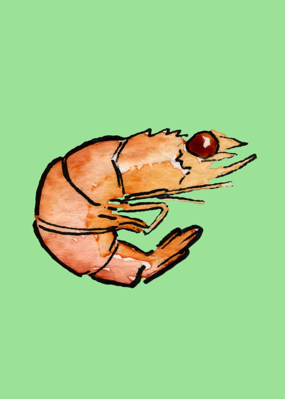 14_Shrimp_PANTONE 2267 C.jpg
