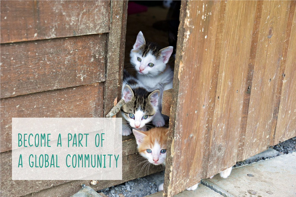 Global-Community-Cats-01.jpg