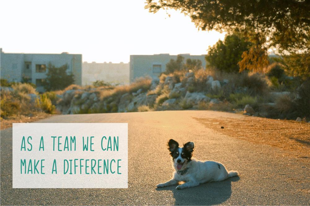 As-A-Team-Dog-1-01.jpg