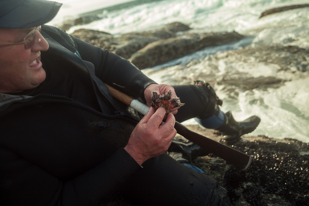 December 19, 2011 - Laxe (La Coruña). Julio cleans a perfect sample of percebe. © Thomas Cristofoletti 2011