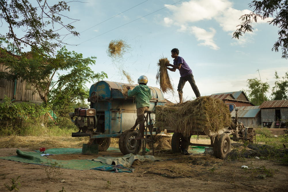 November 29, 2013 - Lvea village, Seang kveang Commune - (Prey Veng). Farm workers load organic rice into a threshing machine and collect the separated rice. © Thomas Cristofoletti / Ruom for UNDP