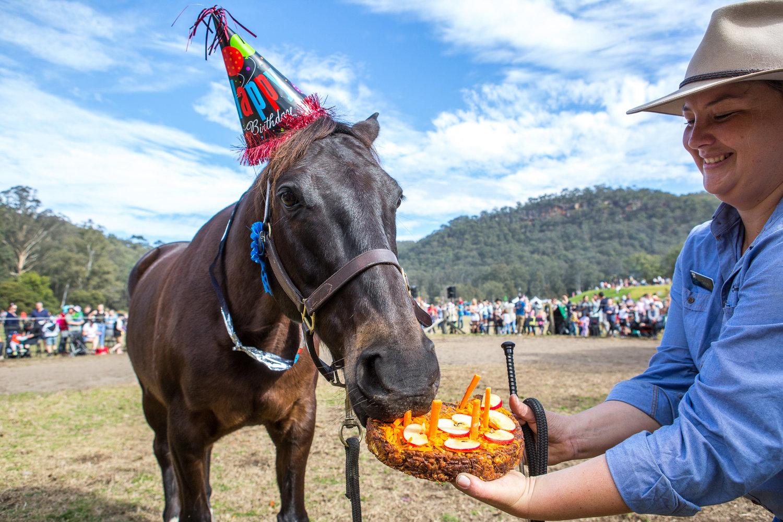 1193GVOA 2017 Horses BDay 0560 LR RGB FA
