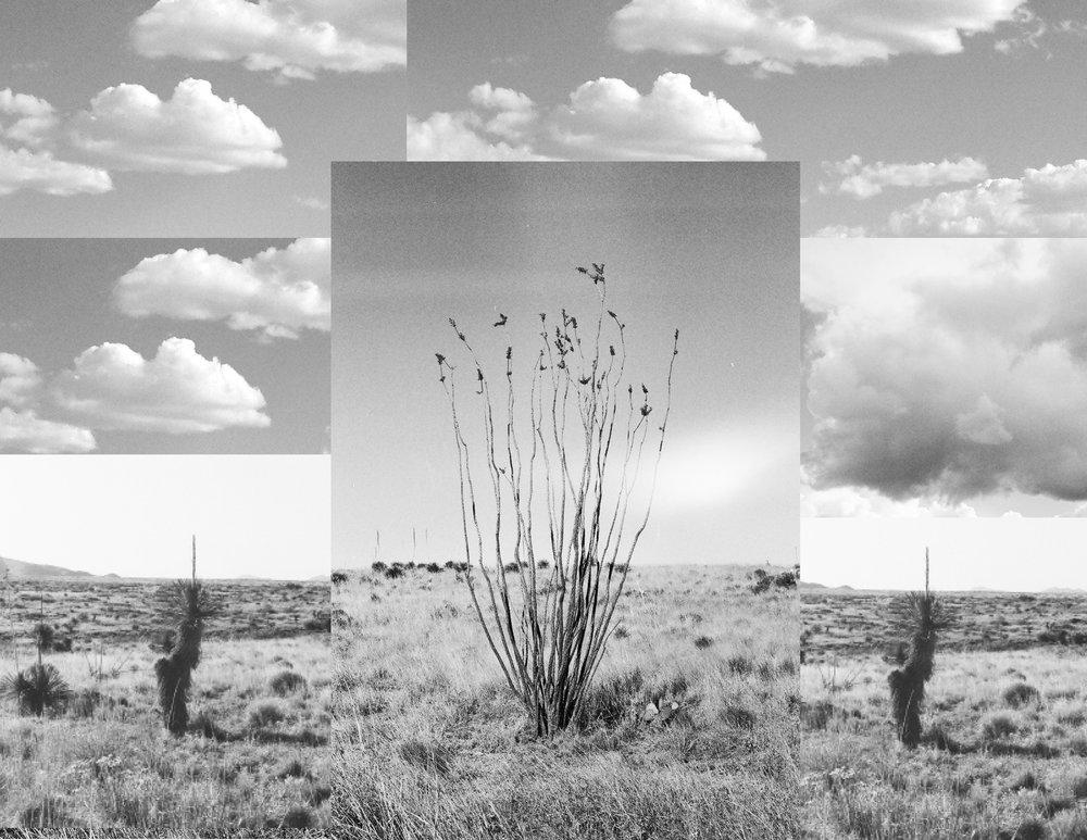 SaenzGordon_Melissa_Cactus.jpg