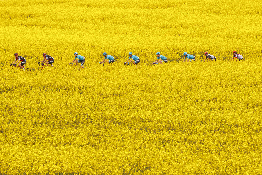 The pack rides between rapeseed fields with bright-yellow flowers during the fifth and last stage, a 181,8 km race between Mont-sur-Rolle and Geneva during the 72th Tour de Romandie UCI ProTour cycling race in Bottens, Switzerland, Sunday, April 29, 2018. (KEYSTONE/Valentin Flauraud)