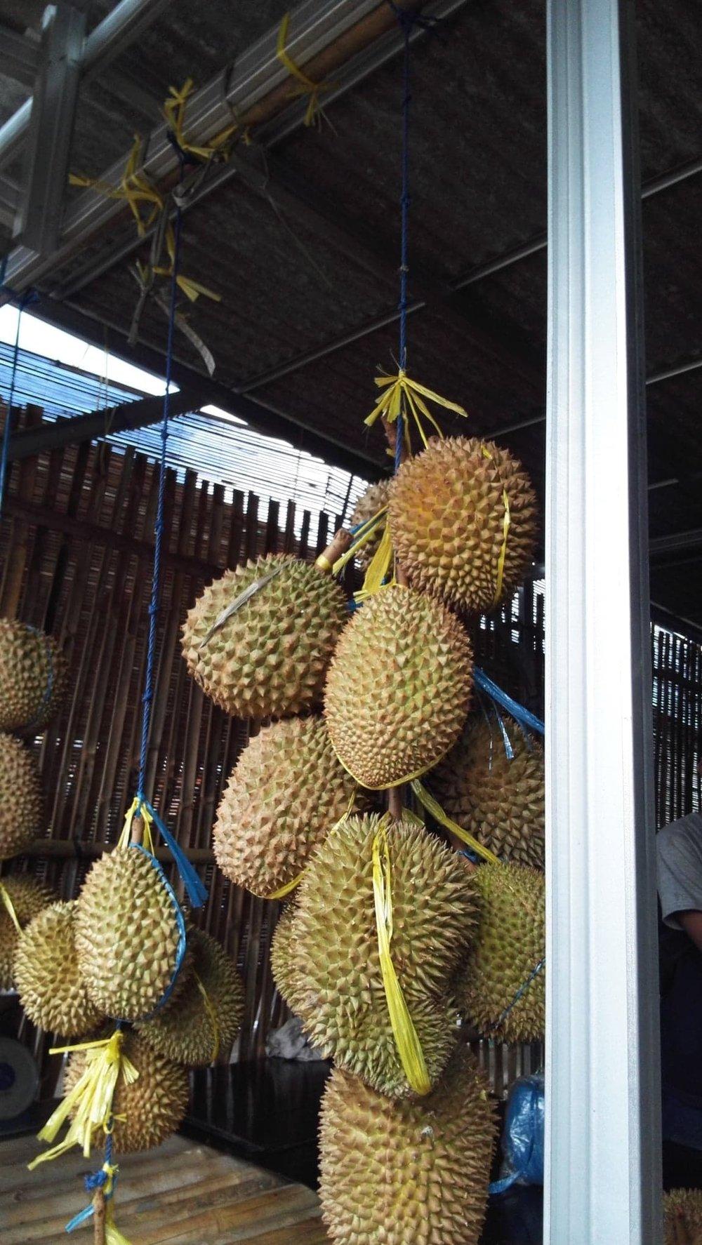 """Le Durian plus communément appelé """"fruit du craspouille"""" par la communauté de 3Francs6Sous."""