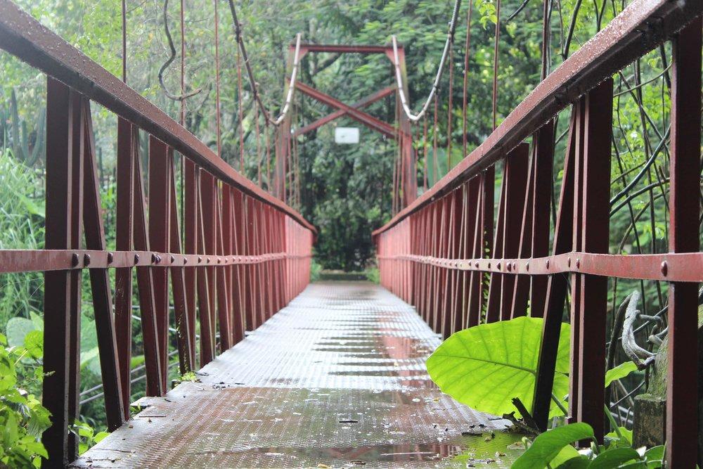 Un pont super joli dans le super jardin botanique de Bogor.