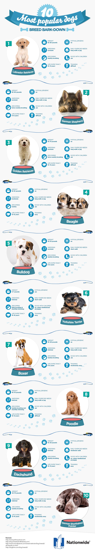 dog-breeds-final.jpg