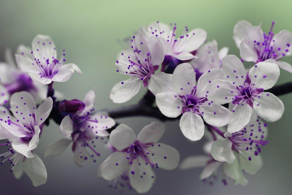 beautiful-bloom-blooming-132474.jpg