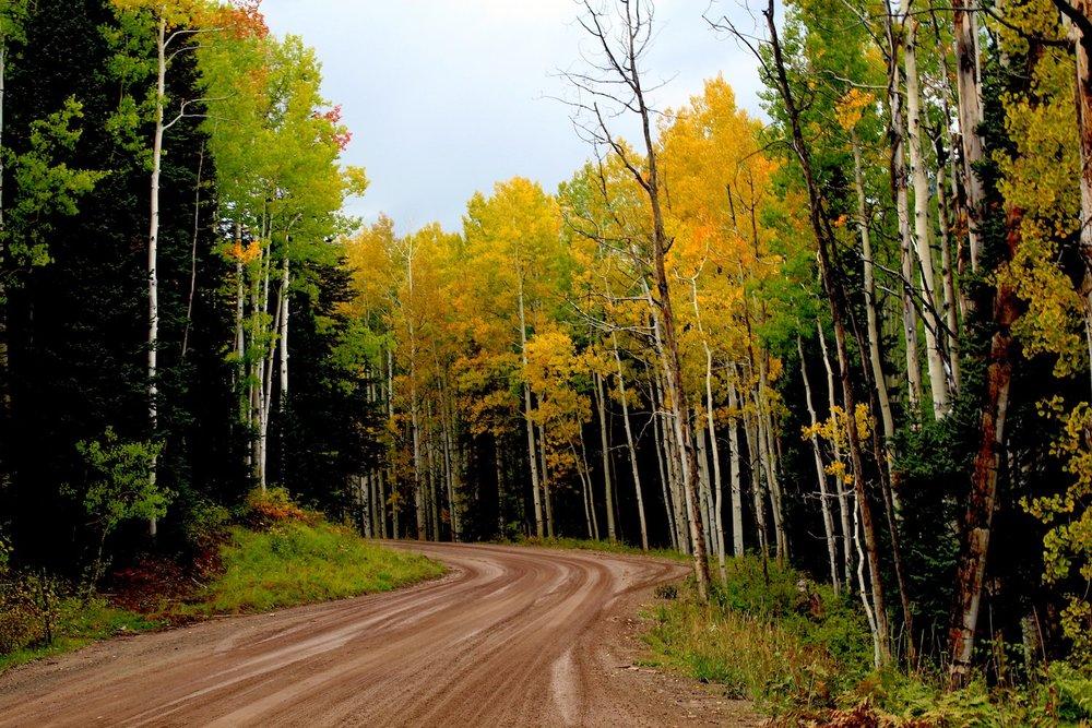 Fall Road_1500.JPG