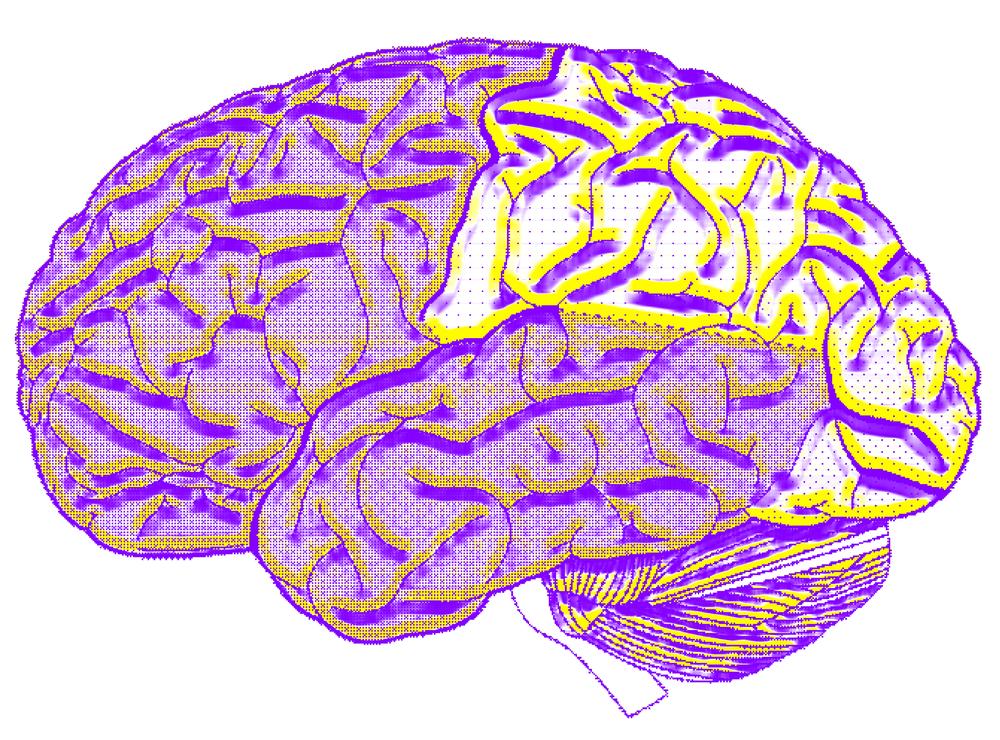 cerebro2.png