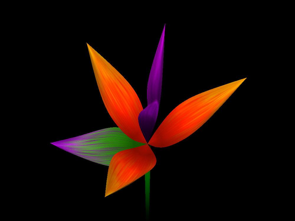 helloflower-Flower1.jpg