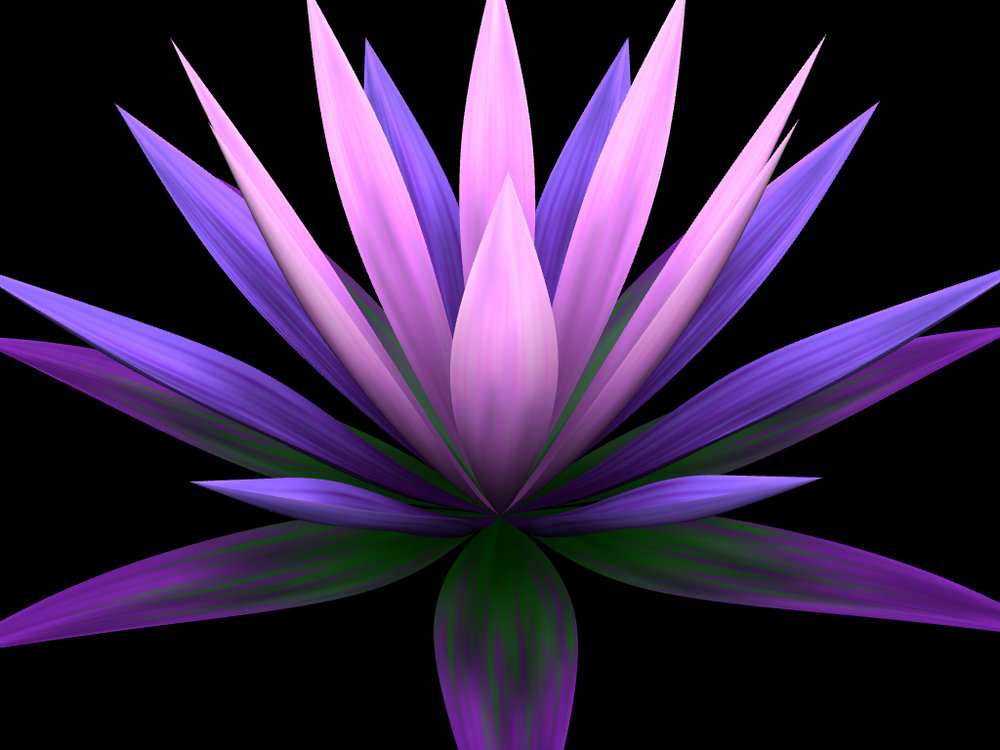 helloflower-Waterlily.jpg