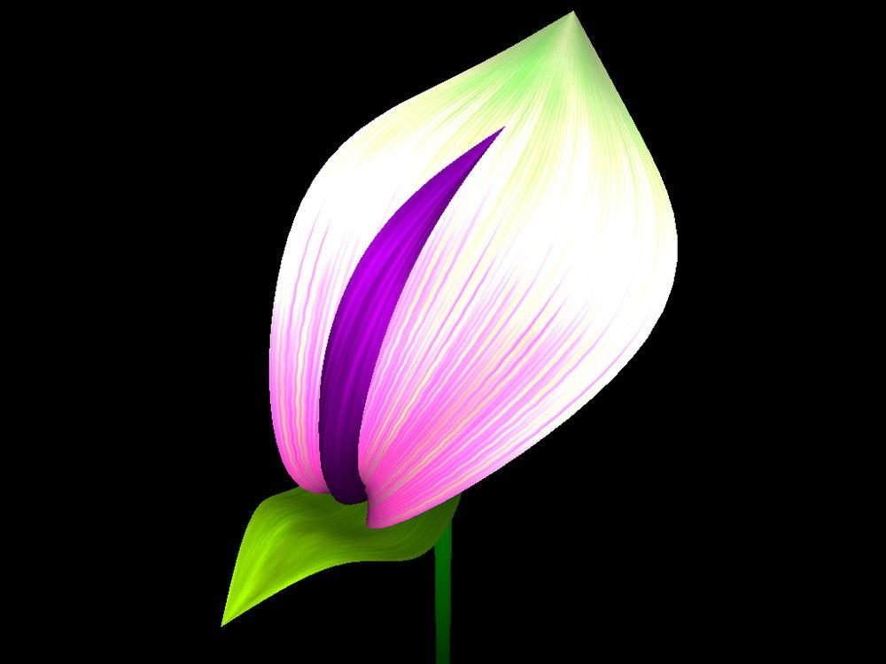 helloflower-Flower3.jpg