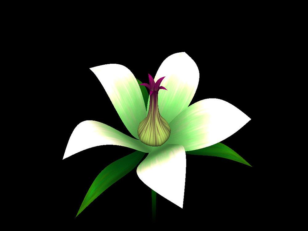 helloflower-Flower4.jpg