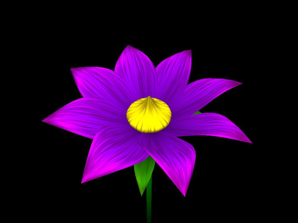 helloflower-Flower22.jpg