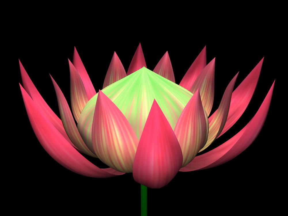 helloflower-Protea.jpg