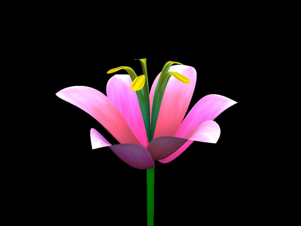 HelloFlower-Lily.jpg