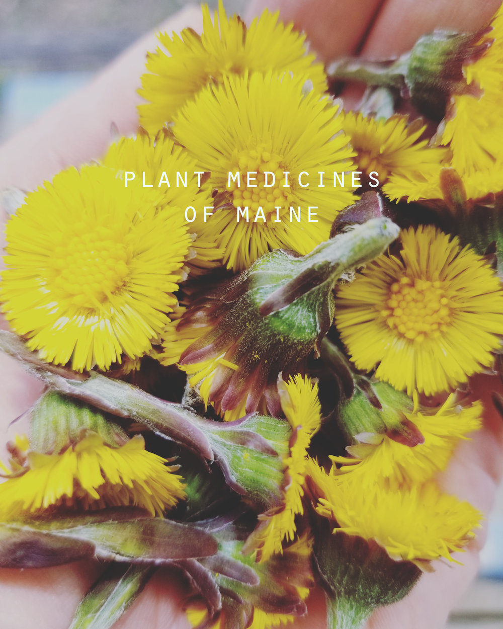 plant medicines.jpg