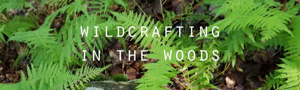 wildcrafting+in+the+woods.jpg