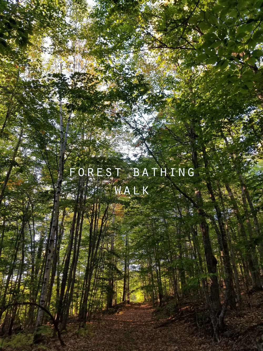 forest bathing.jpg