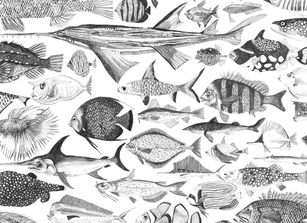 peixesshop.jpg